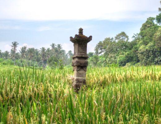 Ubud rice paddies