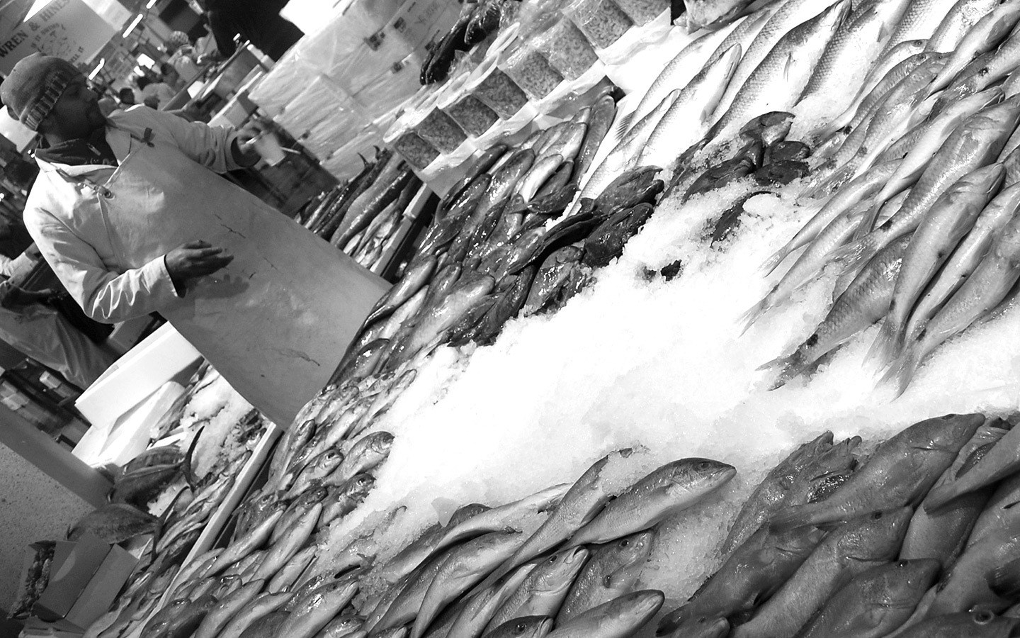 Seafood school at Billingsgate fish market in London