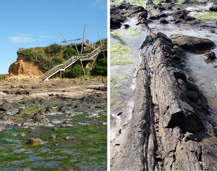 Curio Bay petrified forest