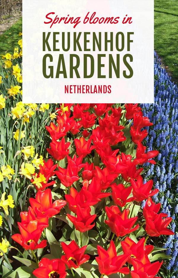 Spring blooms in Keukenhof Gardens, Netherlands