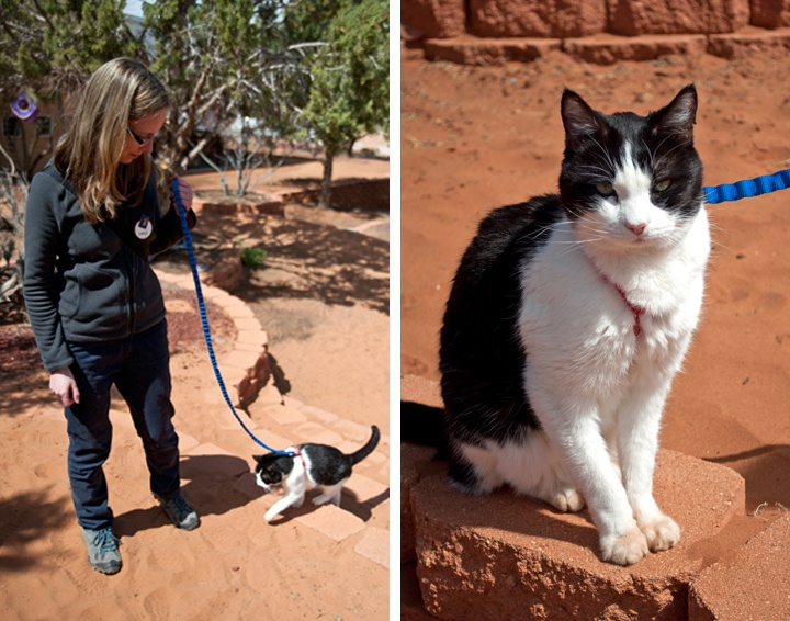 Cats at Best Friends animal sanctuary, Kanab, USA