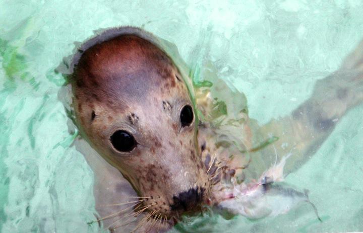 Seal Sanctuary in Gweek, Cornwall in Gweek