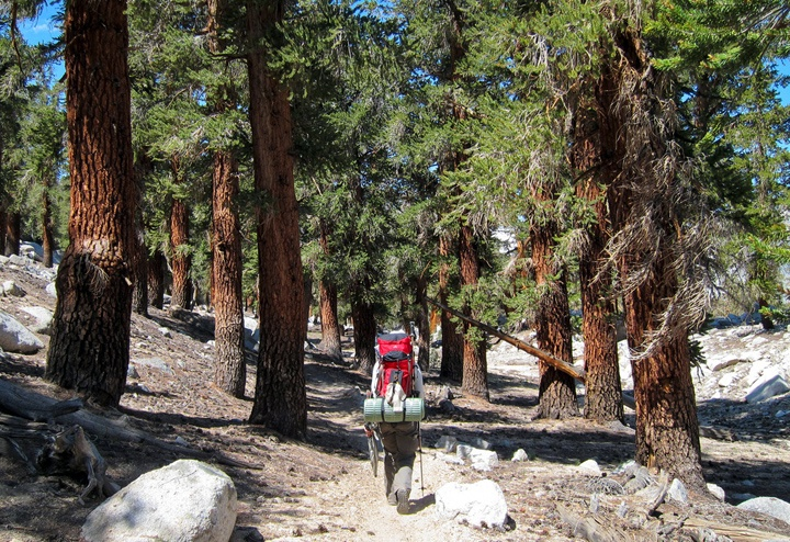 Hiker on the Pacific Crest Trail