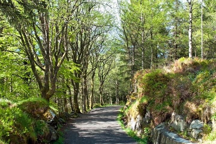 Forest walk from Mount Fløyen in Bergen, Norway