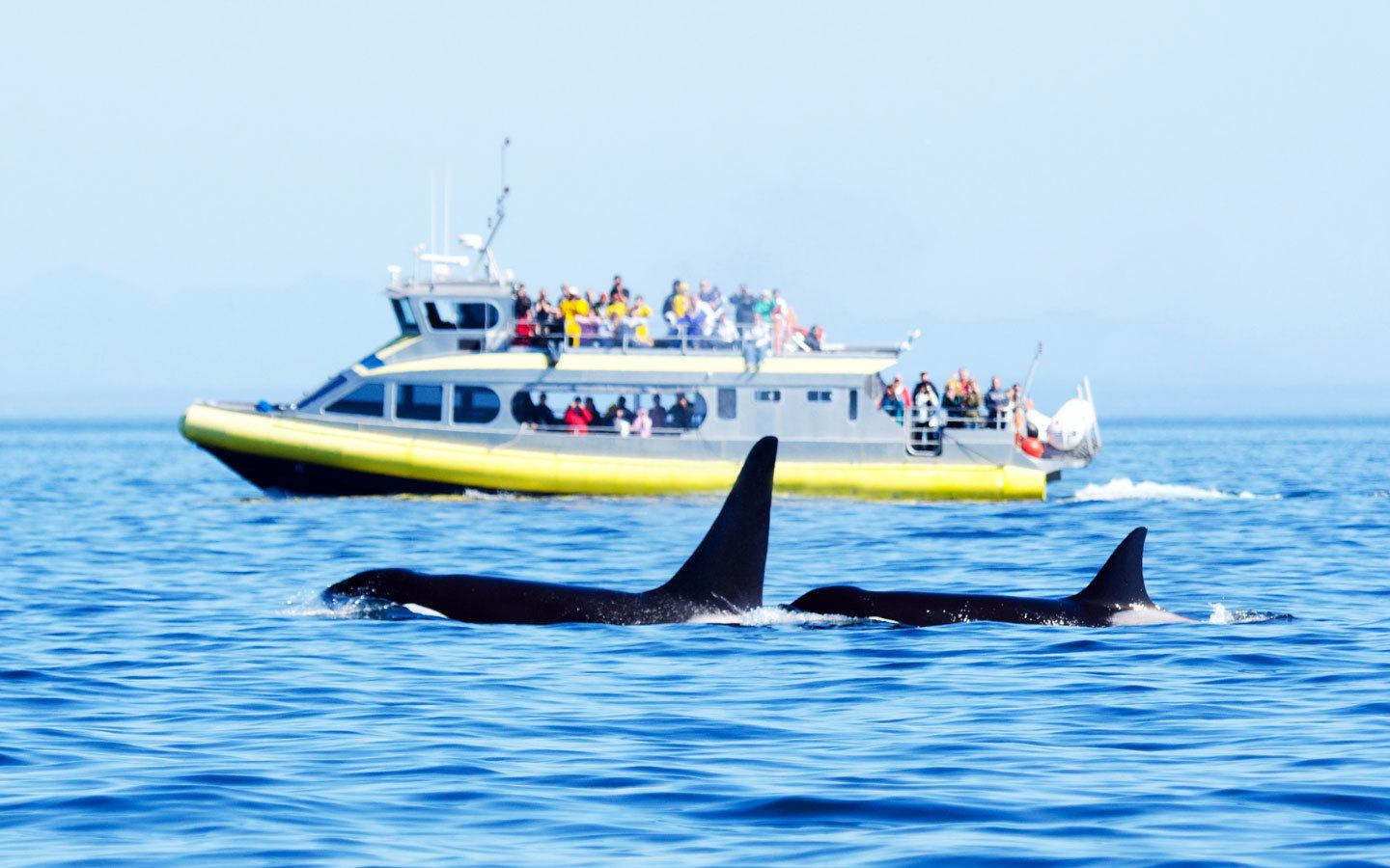 Whale watching off the coast of Vancouver Island