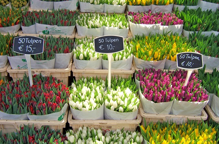Tulips in the Bloemenmarkt, Amsterdam