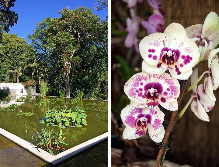 Tenerife Orchid Garden