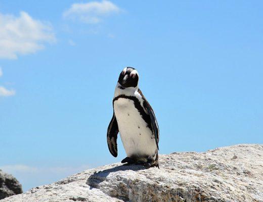 South Africa travel wishlist