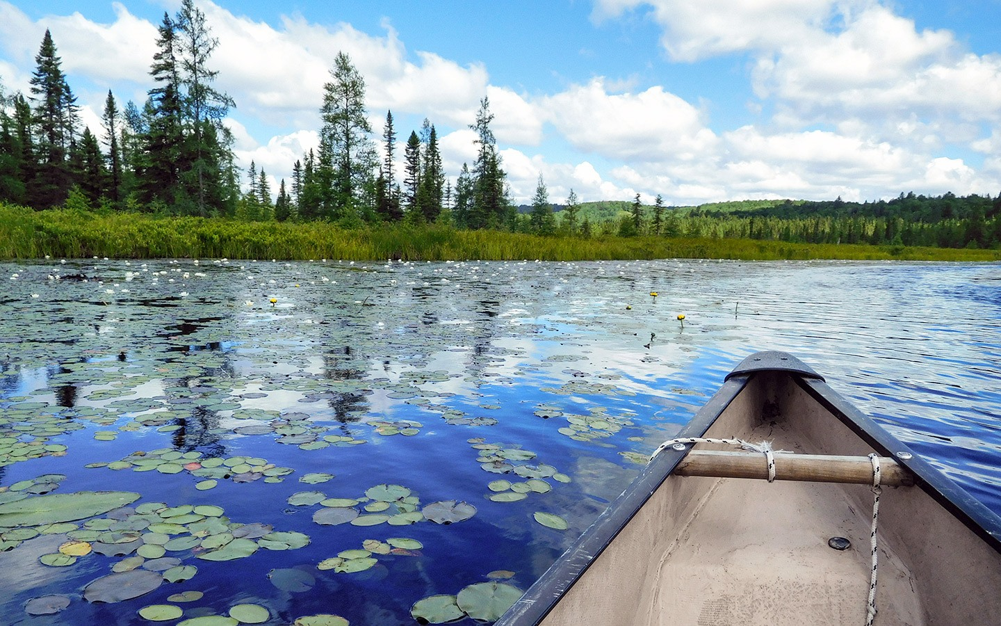Canoeing though the lily pads in in Algonquin Provincial Park