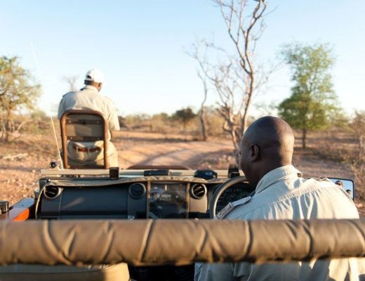 Relearning the art of patience on safari