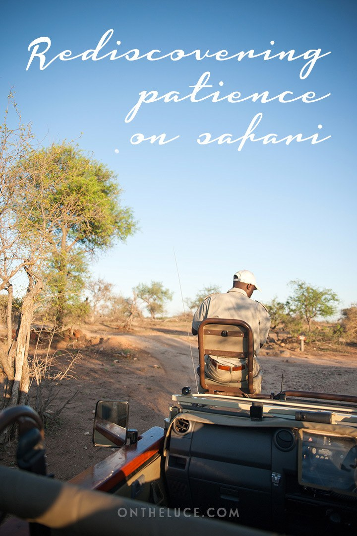 Learning how to watch and wait on safari in South Africa, when your next encounter with a lion, giraffe or elephant could be just a moment away.