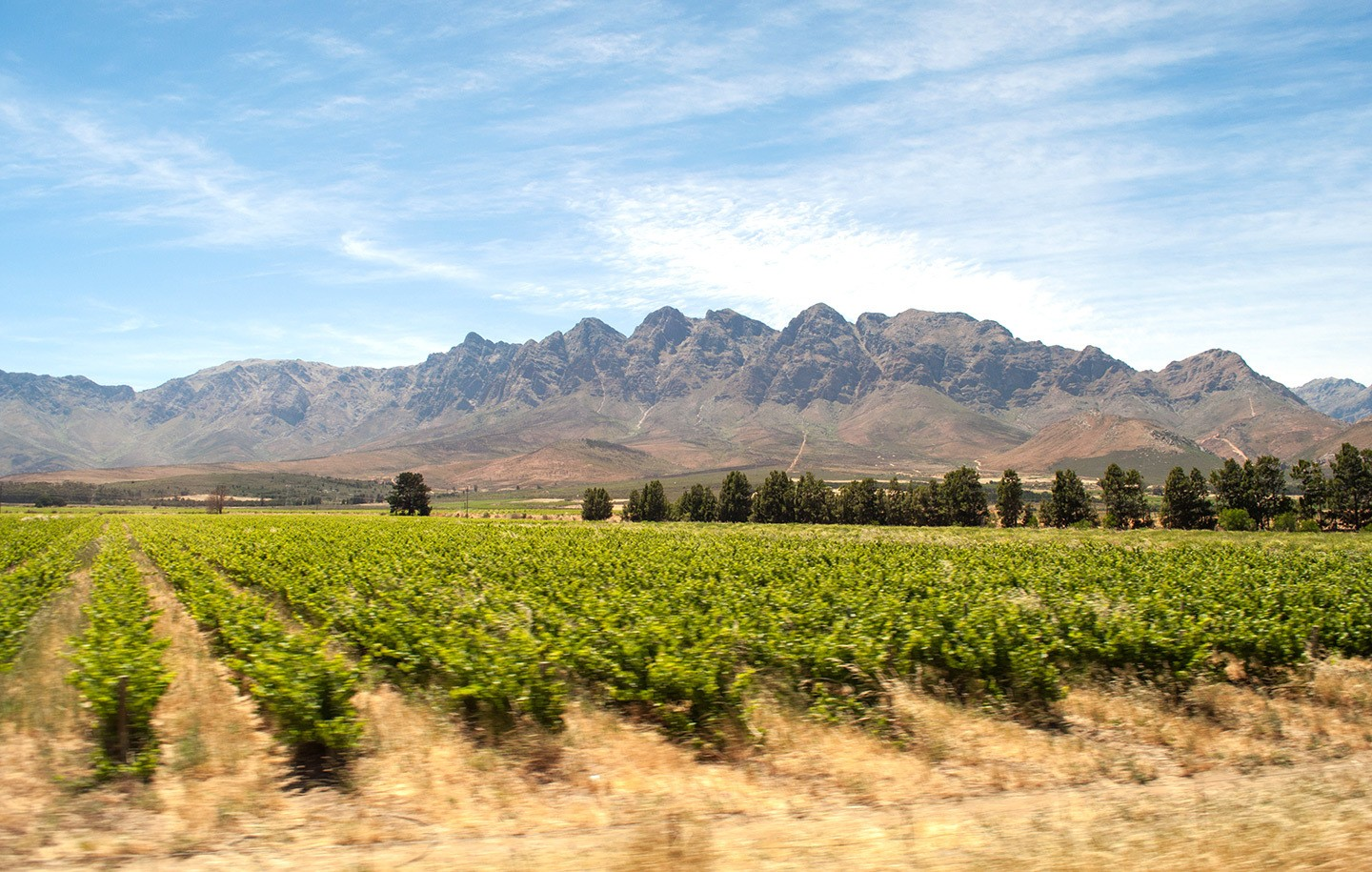 Vineyards from the Premier Classe train South Africa