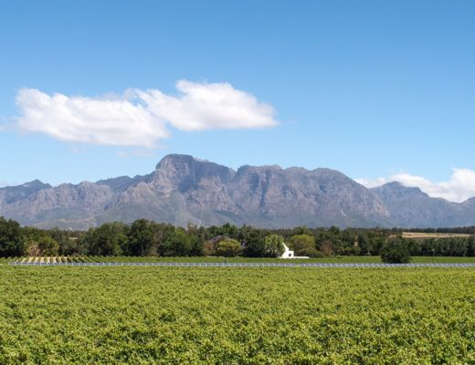 A taste of South Africa's Cape winelands