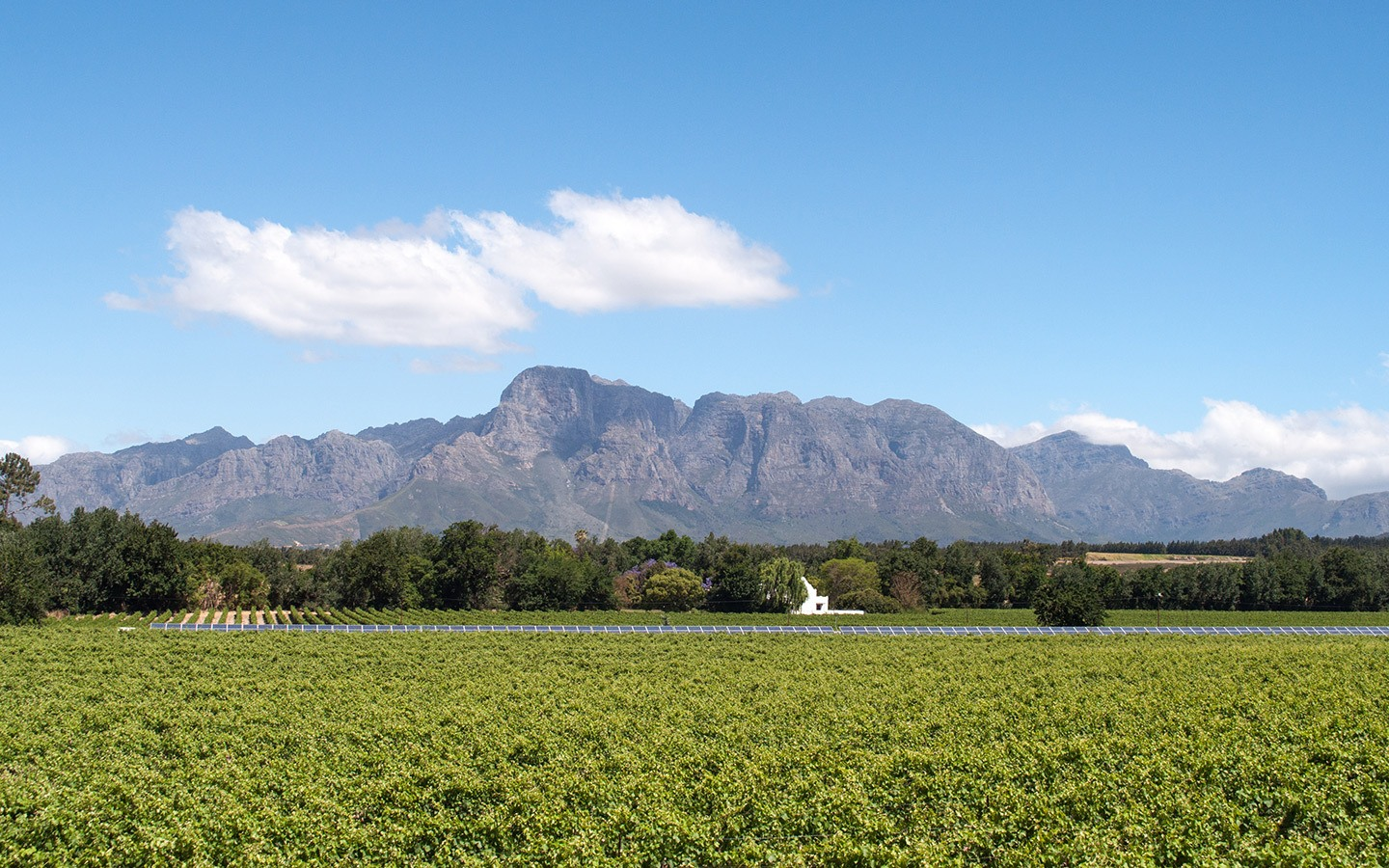 Vineyards in South Africa's Cape Winelands