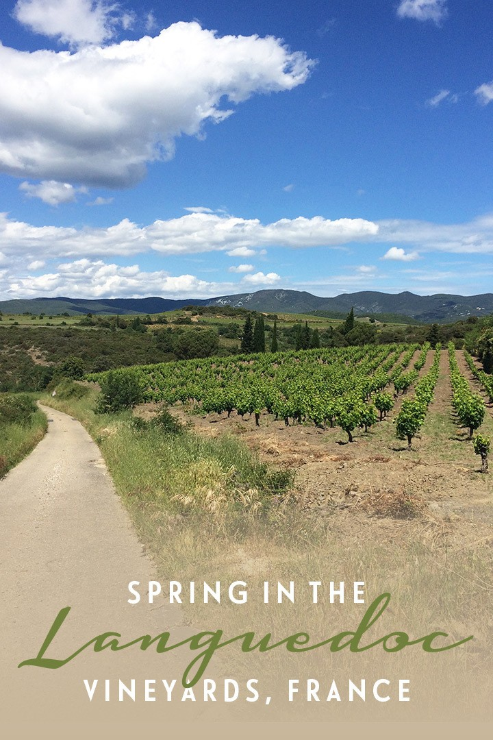 Spring in France's Languedoc wine region