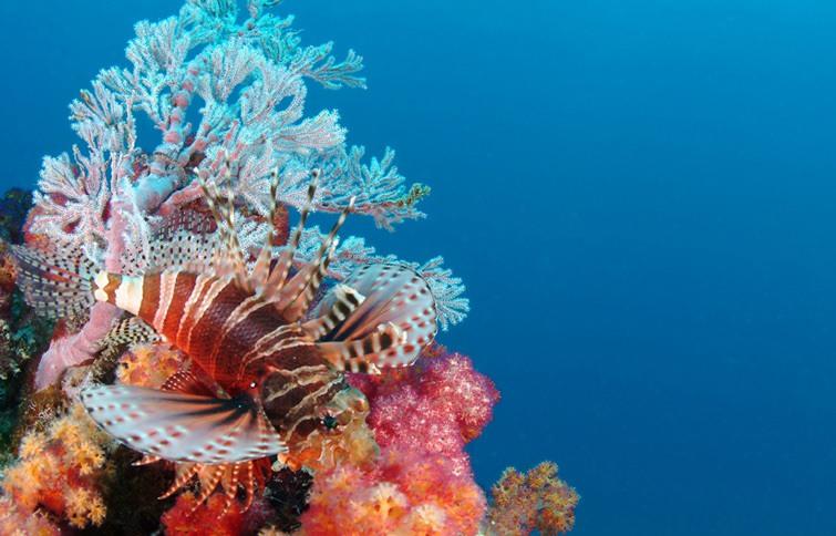 Underwater Seychelles