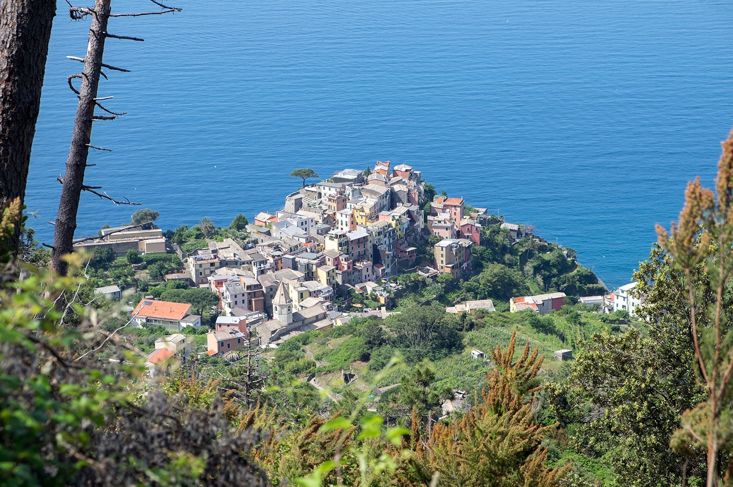 Looking down on Corniglia from above