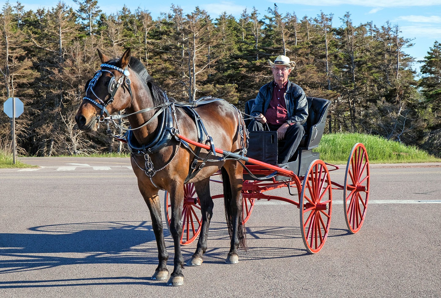 Horse and buggy, Prince Edward Island, Canada
