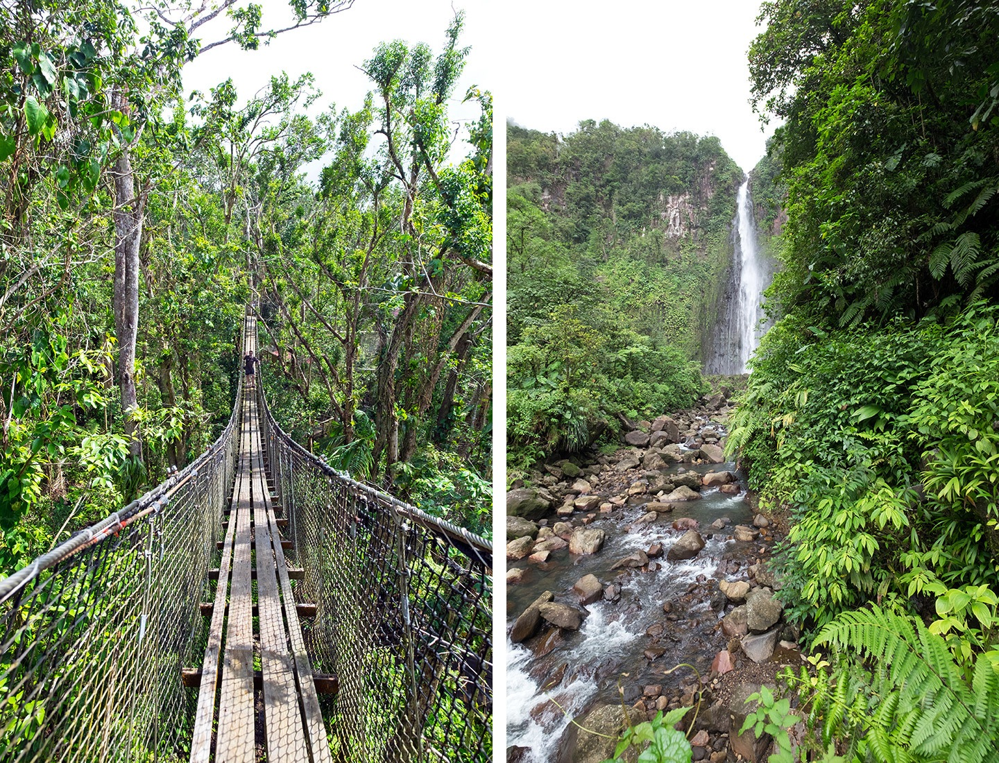 Forest canopy walk and Chutes du Carbet, Basse-Terre, Guadeloupe