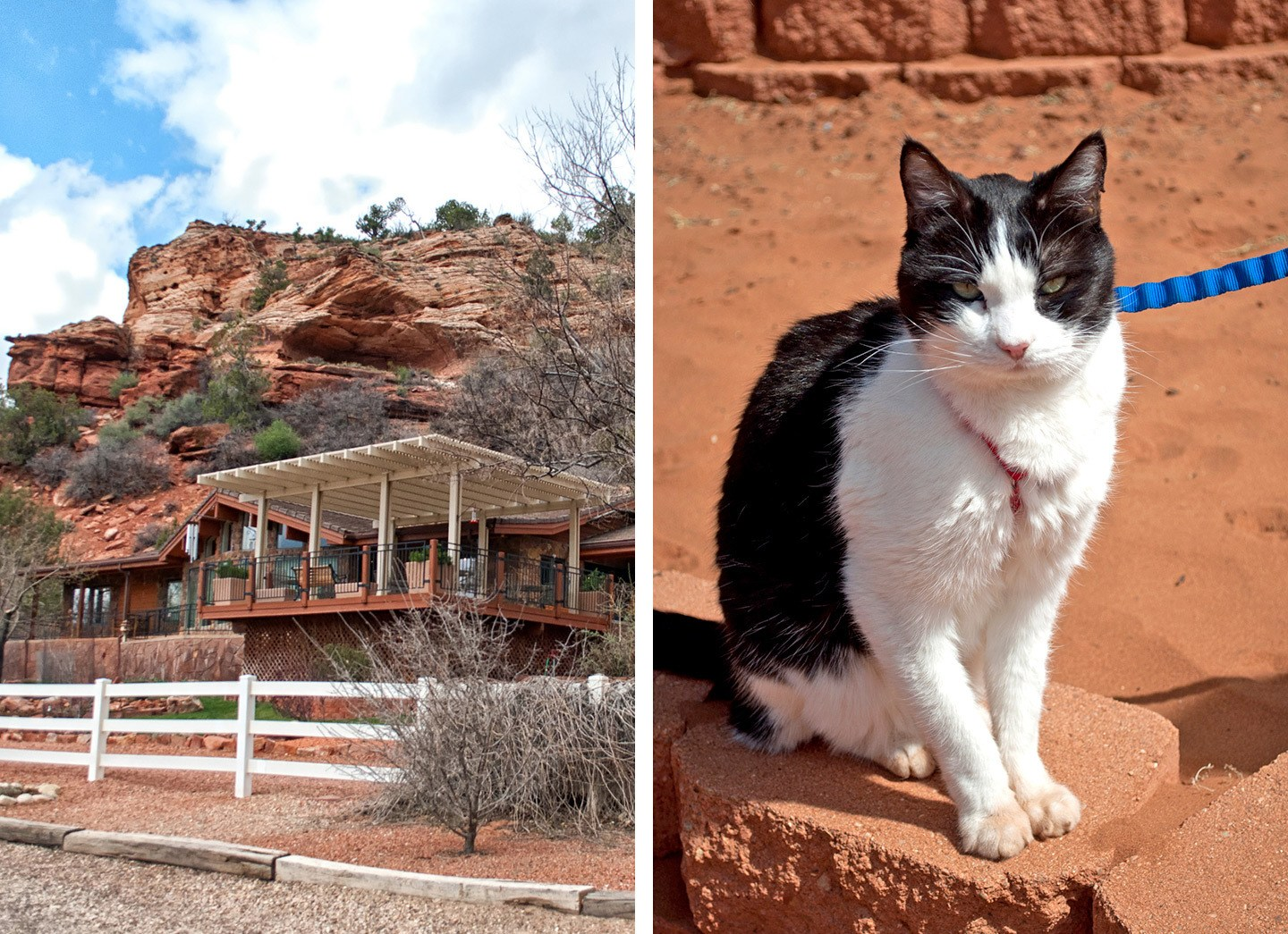 Volunteering at Best Friends Animal Society in Kanab, Utah