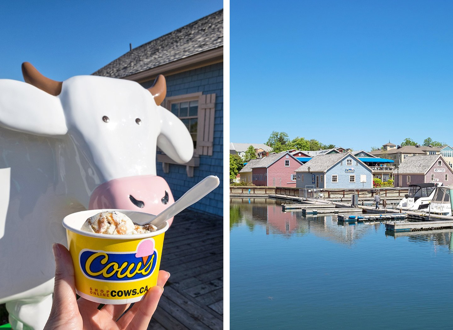 Cows Creamery ice cream in Charlottetown, Prince Edward Island