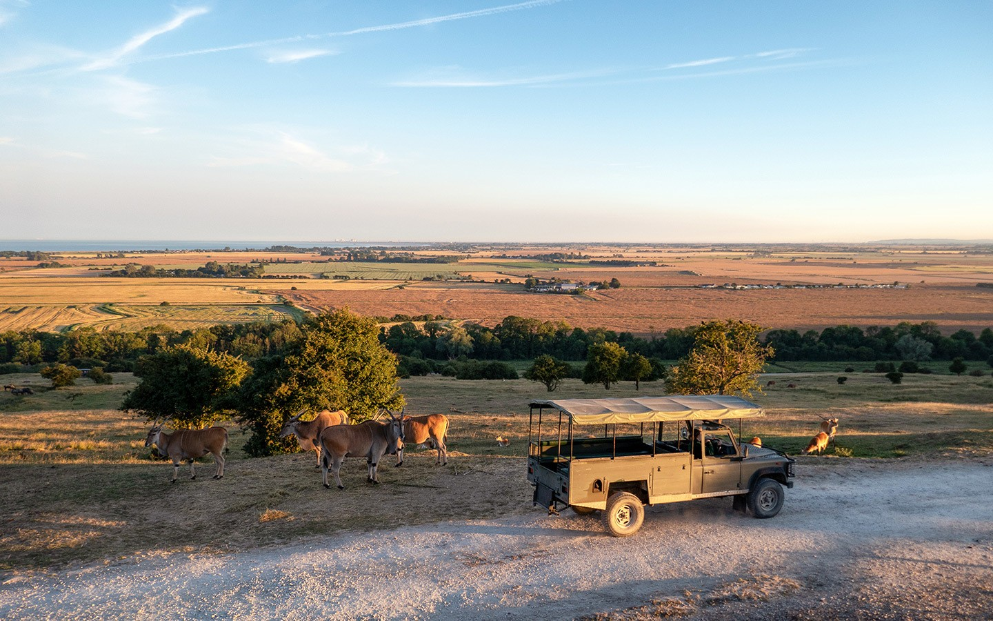 Safari in the UK: A stay at Port Lympne's Giraffe Lodge