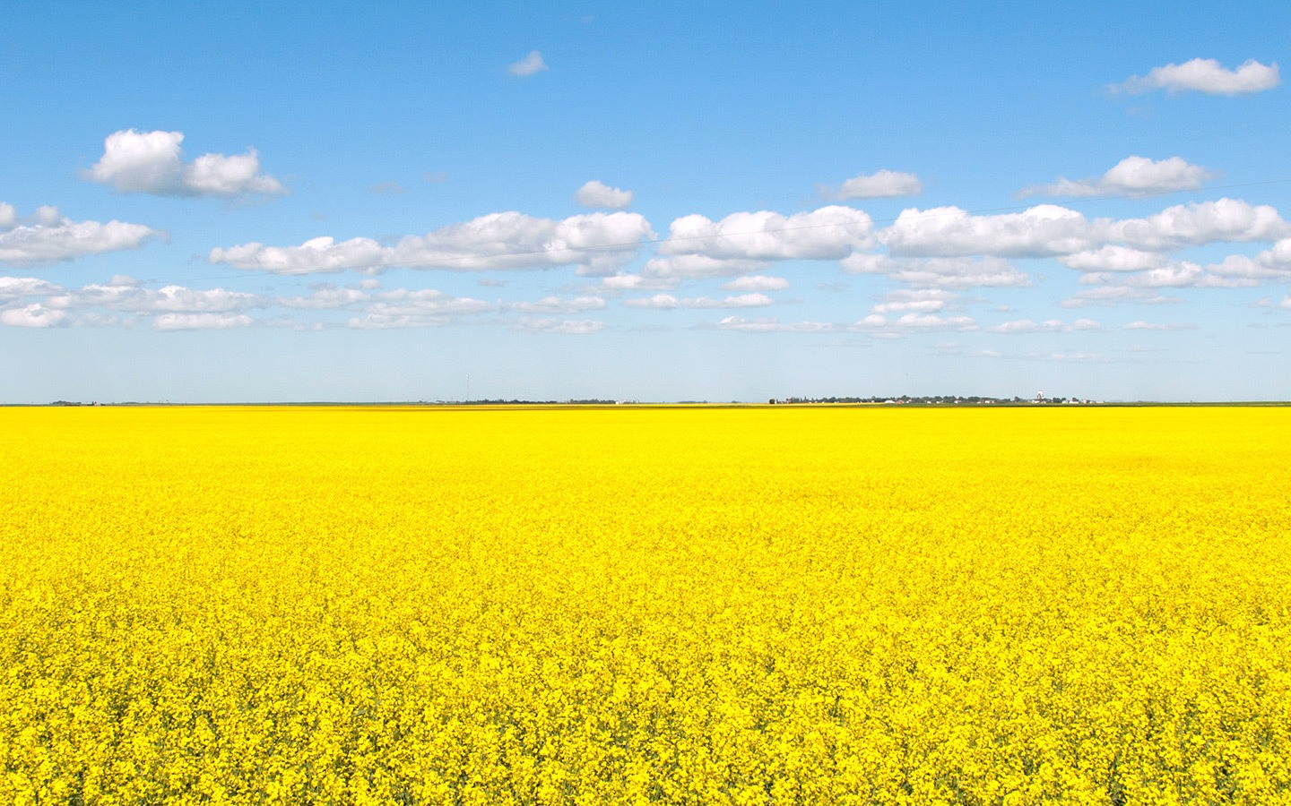 Canola fields on a road trip across the Canadian Prairies