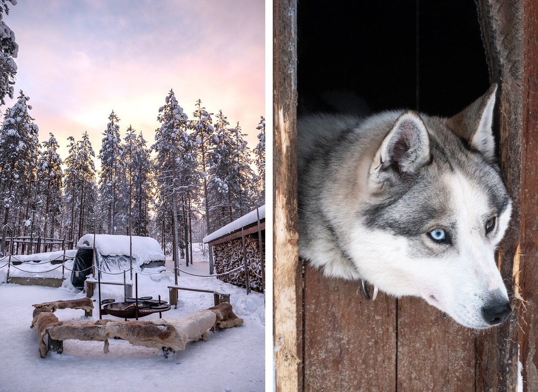 Siberian huskies at Husky Park Rovaniemi