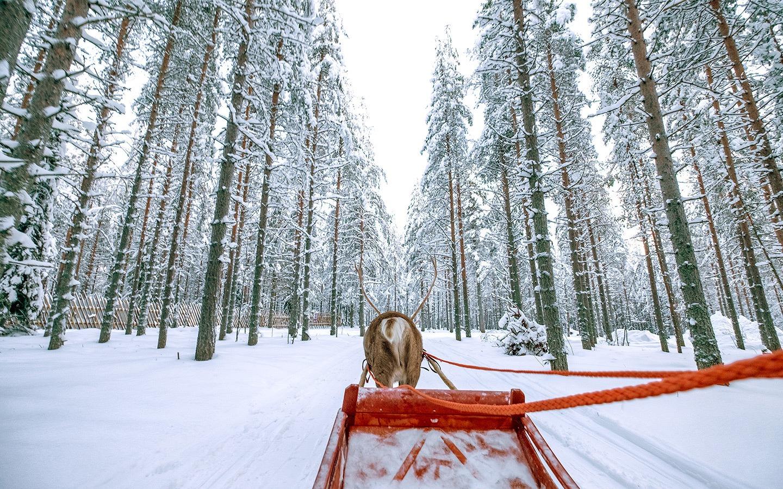 Reindeer sleigh ride in Rovaniemi, Finnish Lapland