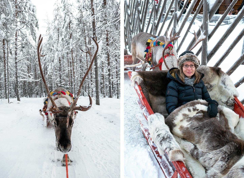 A reindeer sleigh ride in Rovaniemi, Lapland