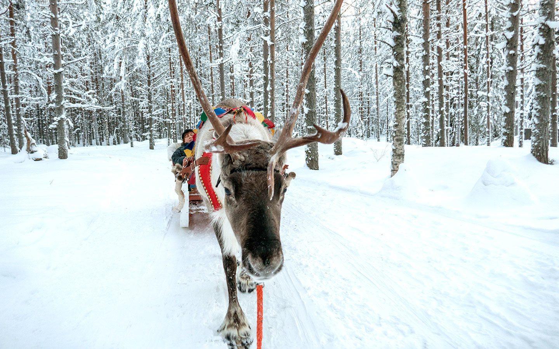 Reindeer at Santa Claus Village in Rovaniemi Finland