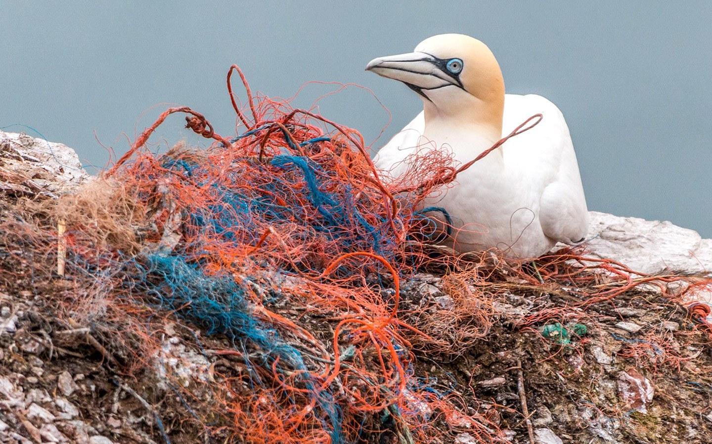 Plastic pollution on the beach with sea bird