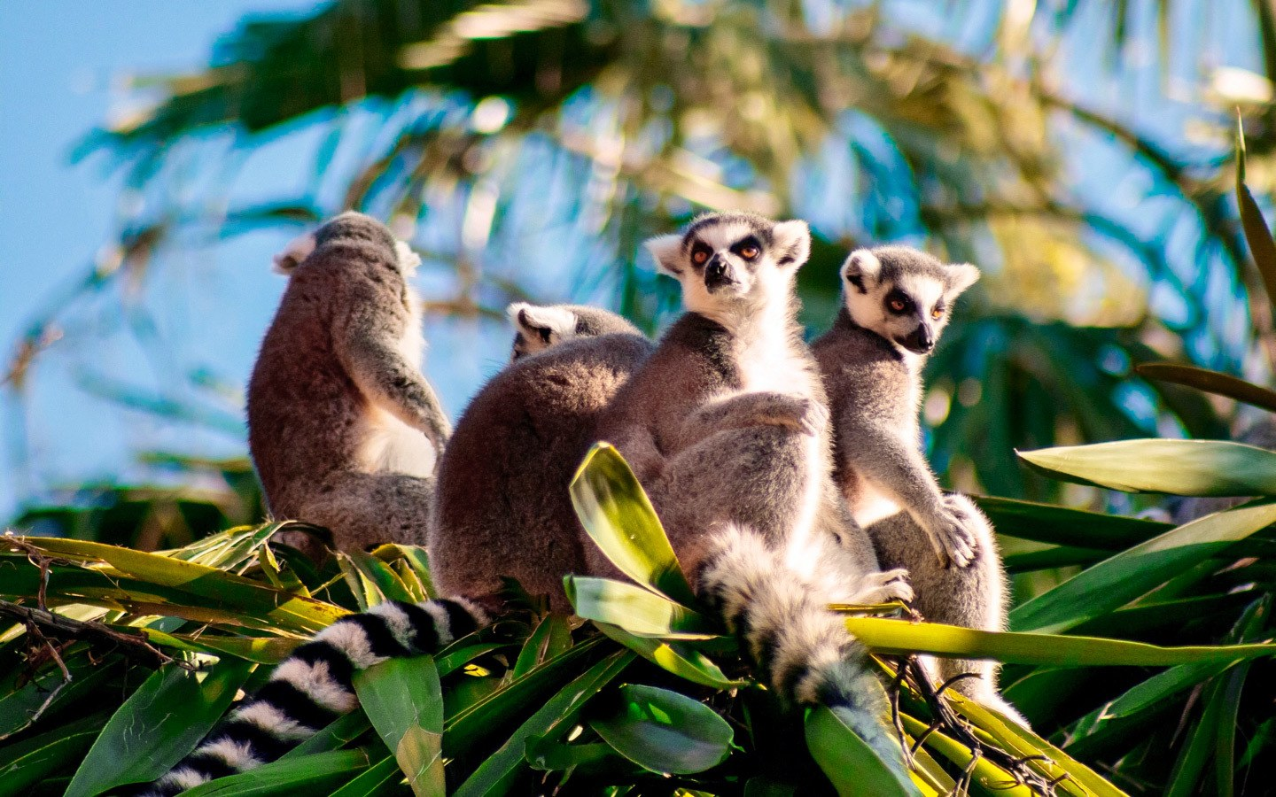 A solo travel trip to see Lemurs in Madagascar