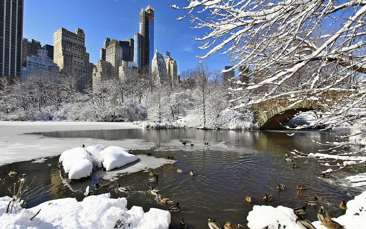 Central Park in New York in winter