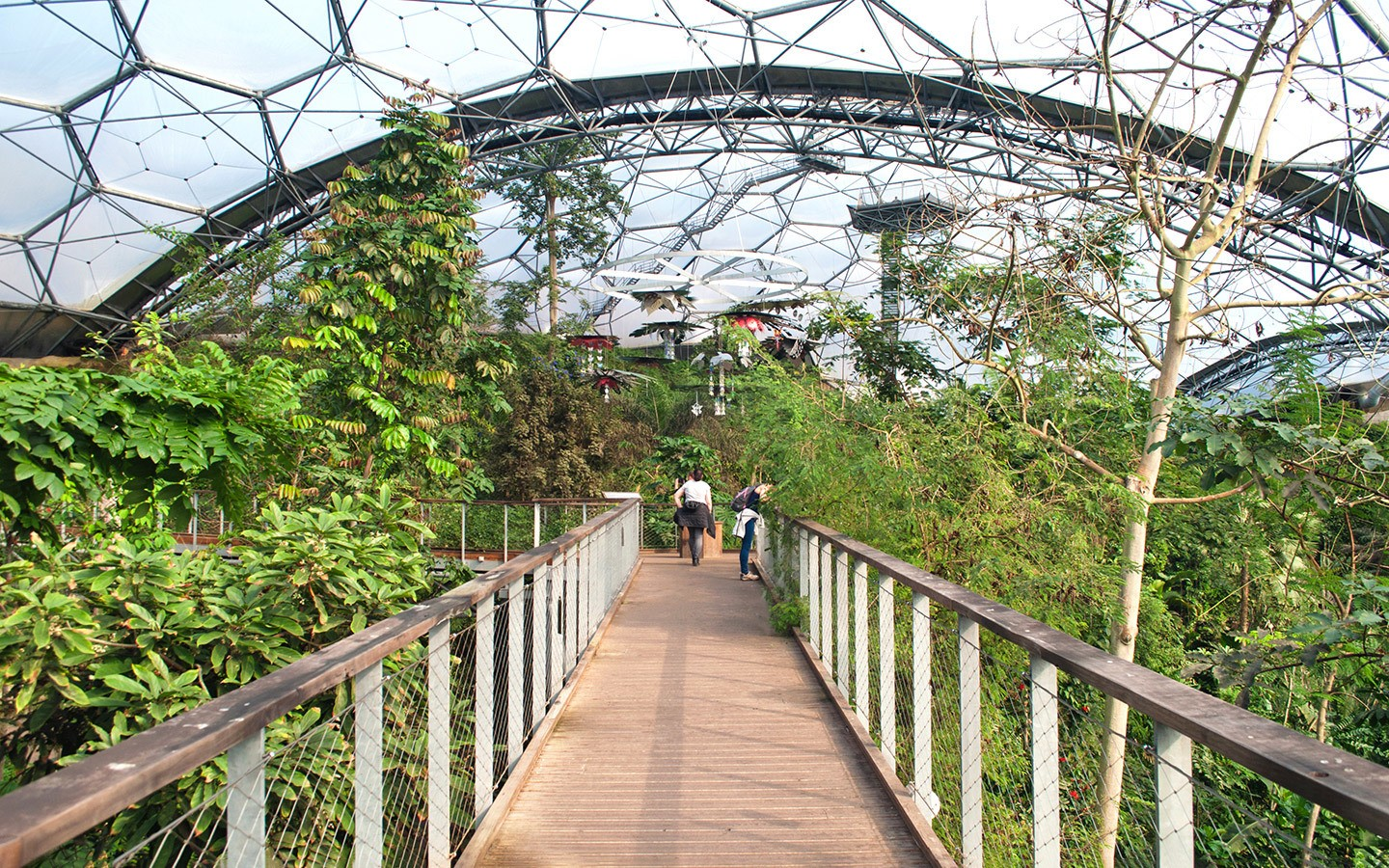 Rainforest canopy walkway at the Eden Project in St Austell, Cornwall
