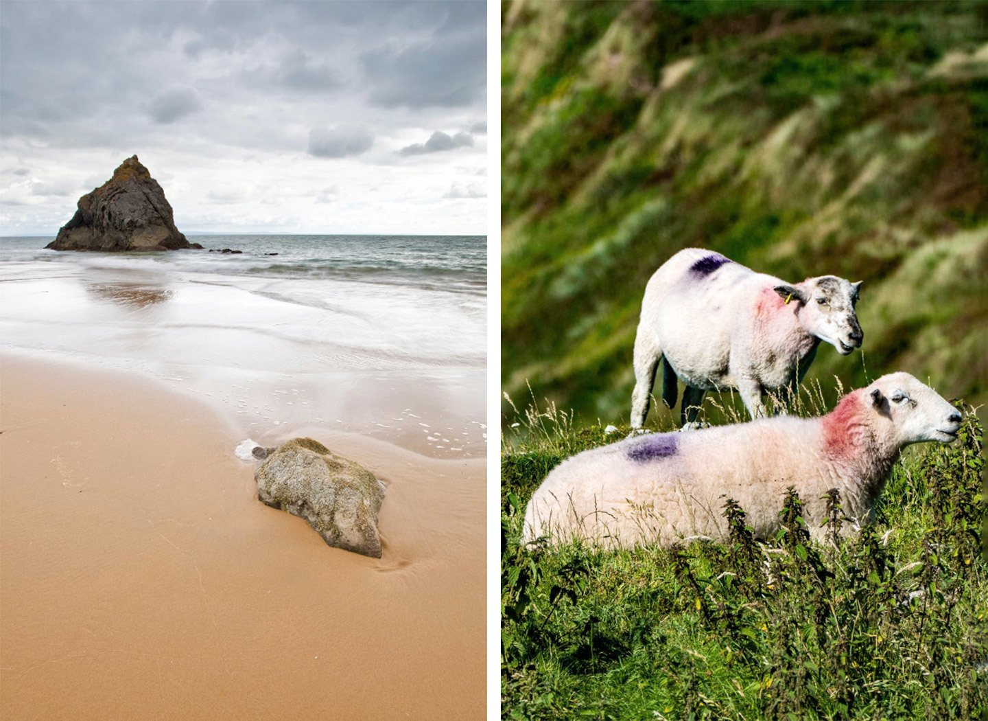 Beaches and sheep on the Gower Peninsula in South Wales