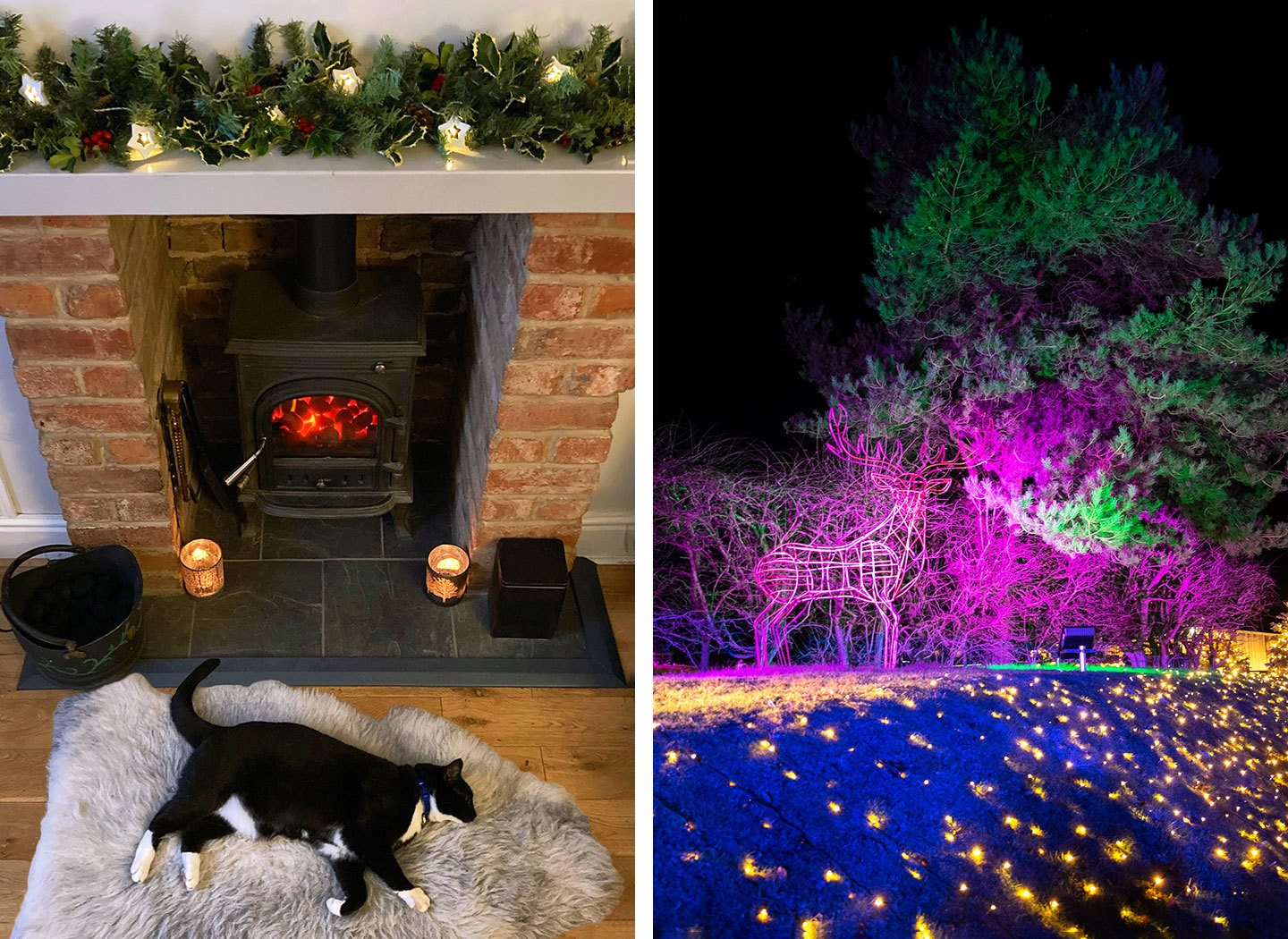 Cat by a woodburner and lights at Cotswold Farm Park at Christmas 2020