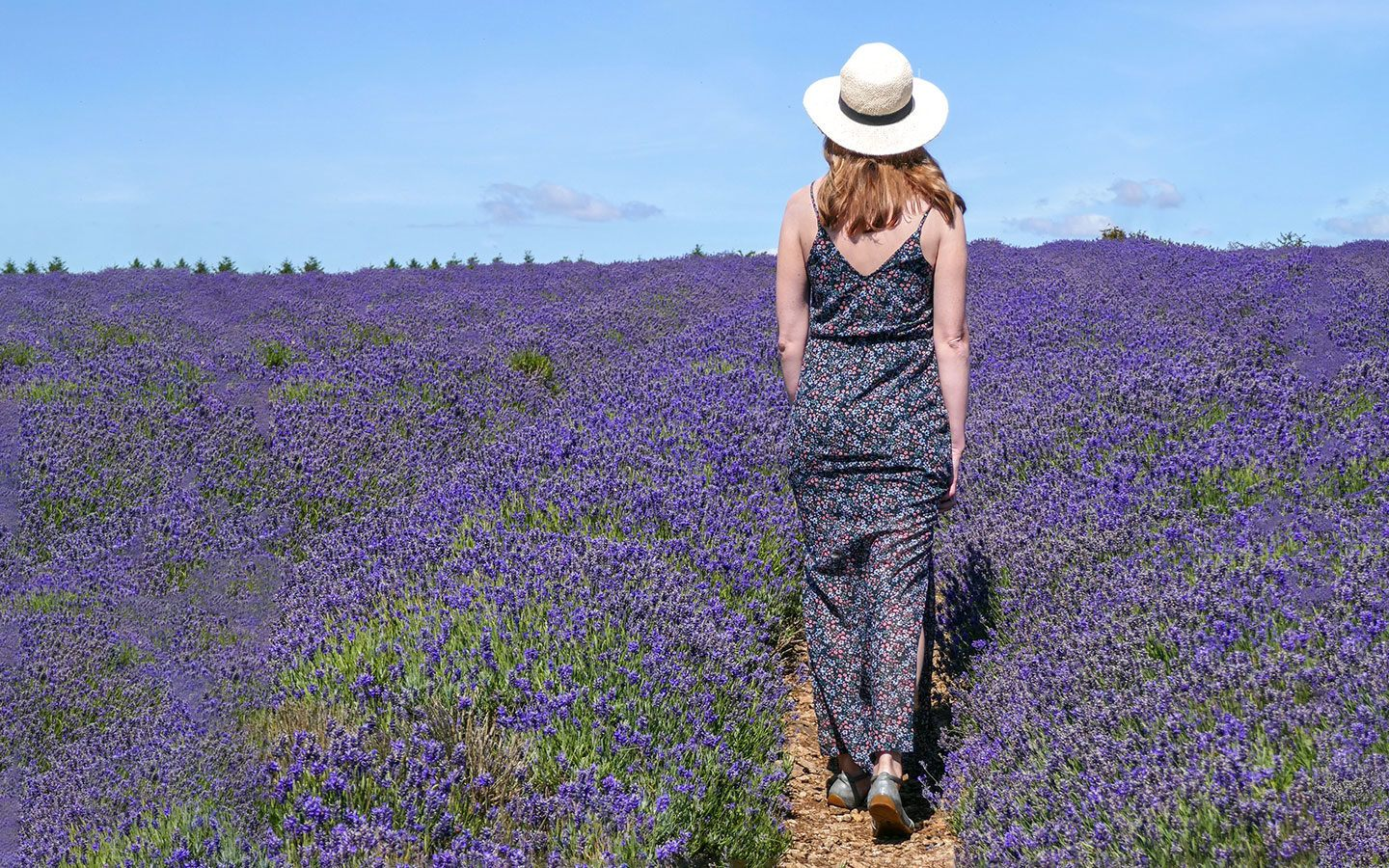 The Cotswold Lavender fields