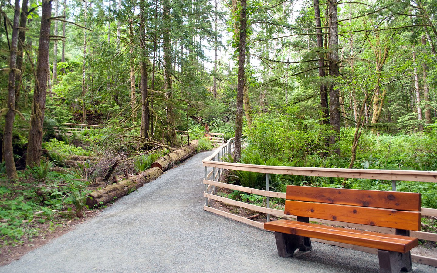 Temperate rainforest on Vancouver Island