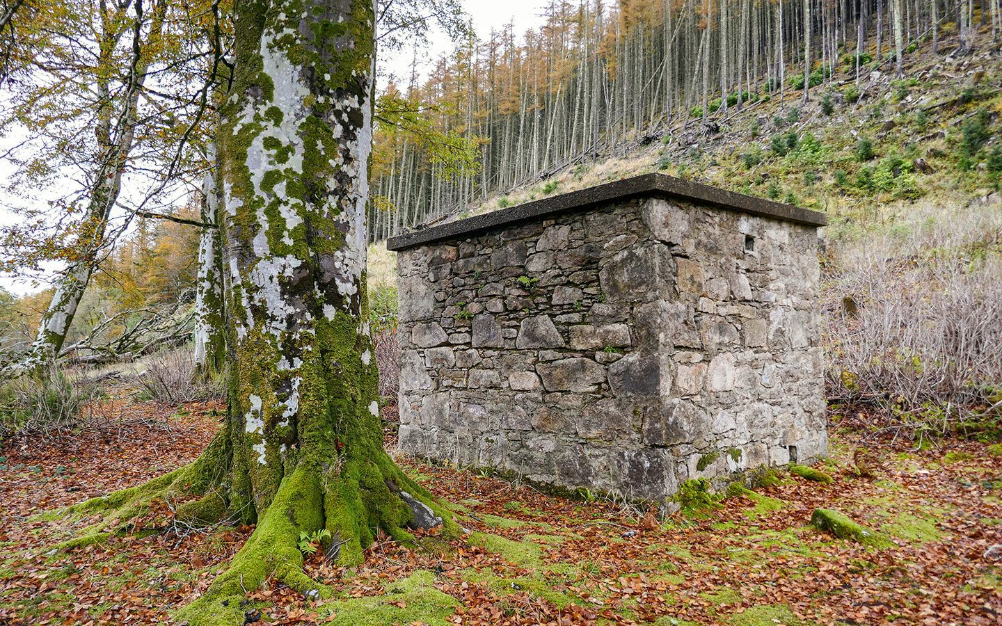 Remains of buildings on the Burma Road and Miners' Trail  walk on a Raasay day trip