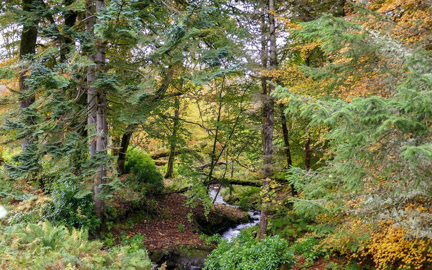 Forests in autumn on a day trip Raasay in the Inner Hebrides, Scotland